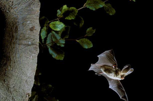 Lynne Allbutt: Why we should all be batty about bats - Lynne Allbutt - Wales Online